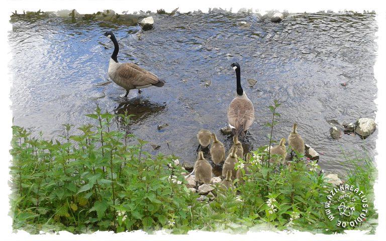 Eine tierische Familie