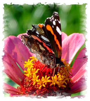 Dieses Bild hat ein leeres Alt-Attribut. Der Dateiname ist Schmetterling-1-klein.jpg