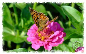 Schönheit der Schmetterlinge