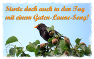 Read more about the article Tanze durch den Tag