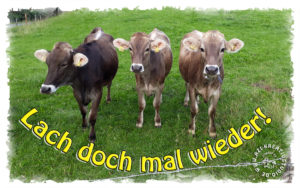 Read more about the article Lachen ist gesund