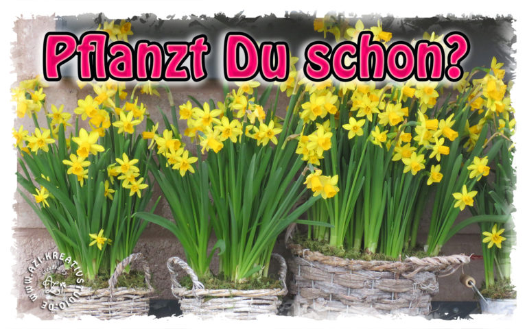 Read more about the article Jetzt pflanzen