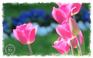 Jeder Mensch ist wie eine Blüte