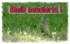 Read more about the article Nutze die Zeit