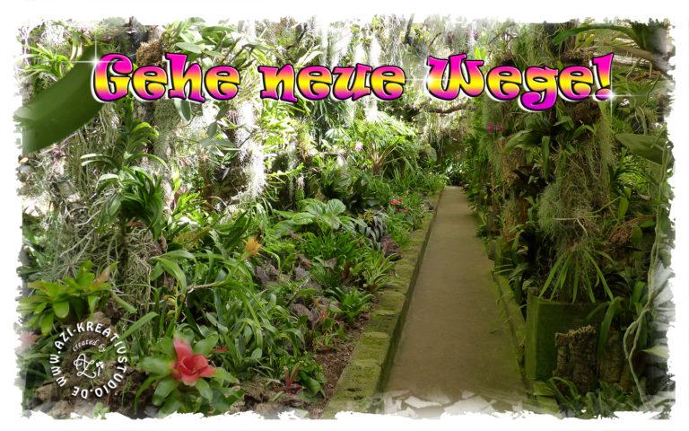 Read more about the article Ein neuer Weg