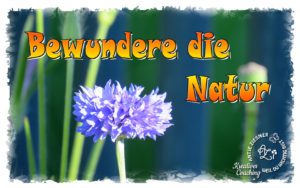 Read more about the article Bewundere die Natur